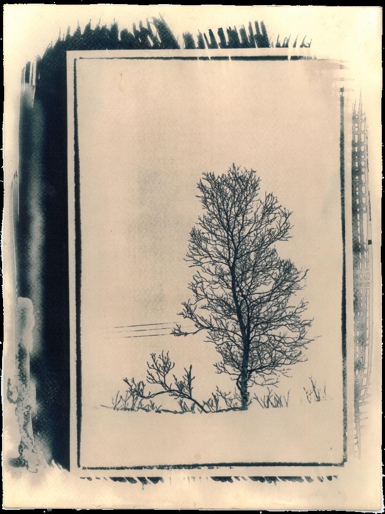 Cyano_Baum4