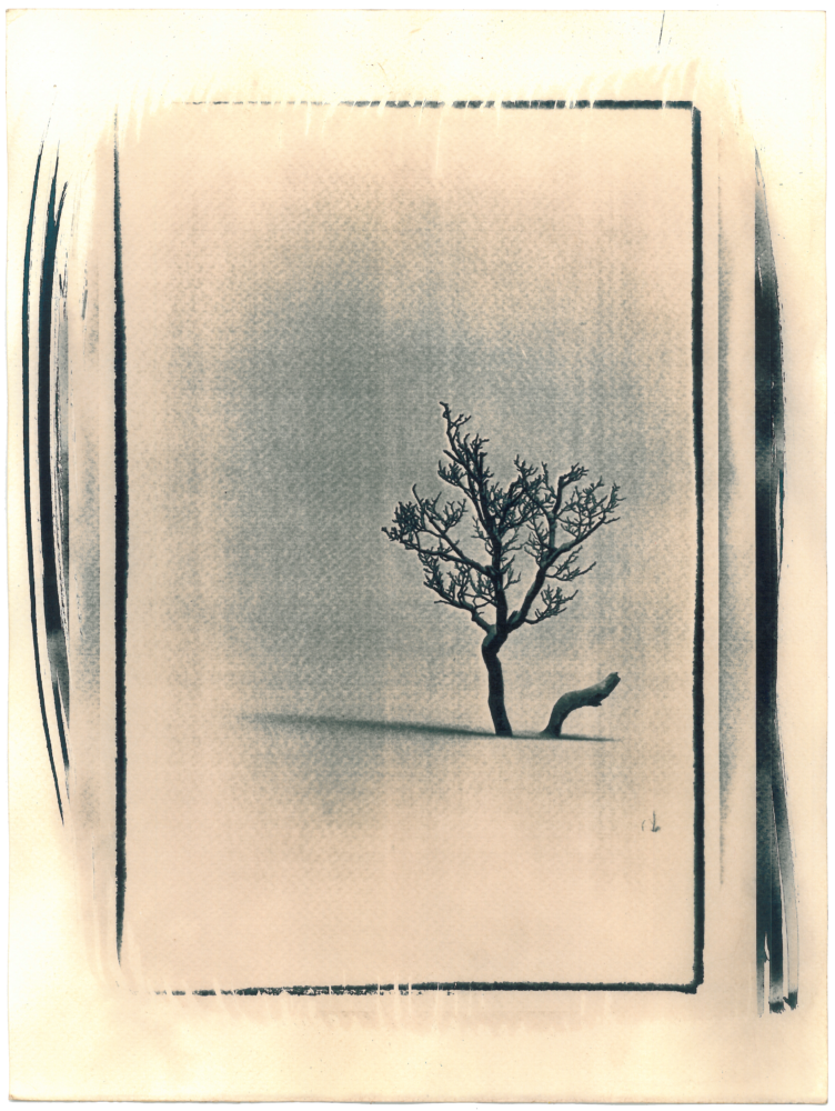 Cyano_Baum5
